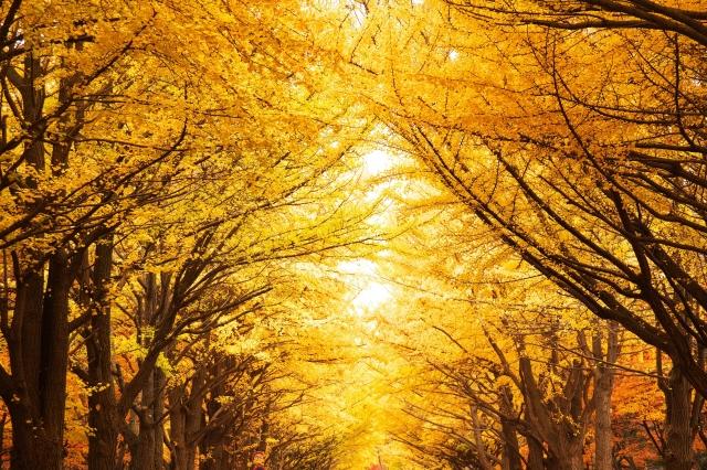 秋チュニック