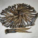 幻の魚ゲンギョの干物取り寄せ通販