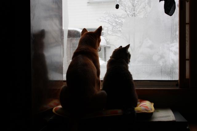 遠赤外線ペットの夢こたつ